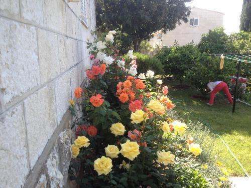 Photo 9 - Apartment Flora