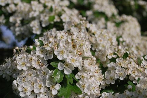 Photo 5 - Geranium Gifts