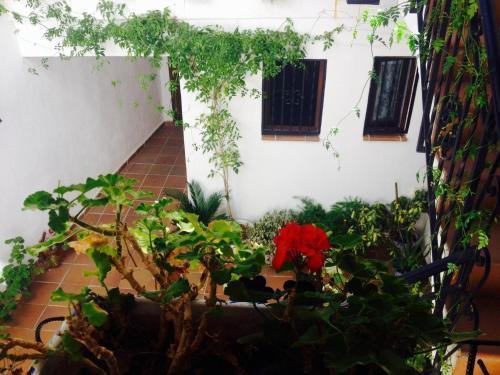 Foto 24 - Casa callejon de Echevarria
