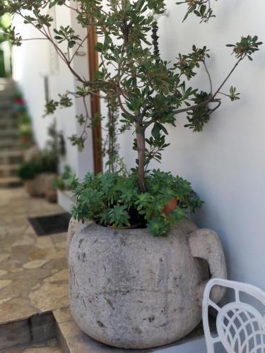 Photo 11 - Adriatic Apartments
