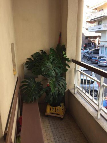 Foto 12 - Apartment Rue Scaliero