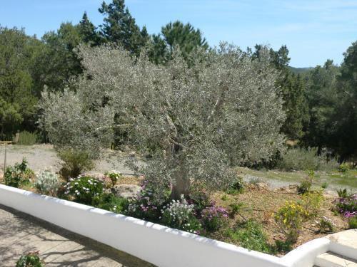 Foto 33 - Villa Es Socorrat