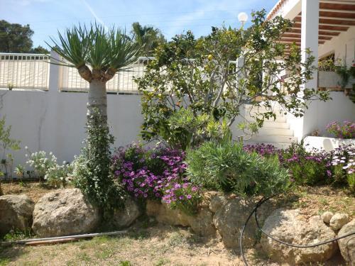 Foto 35 - Villa Es Socorrat