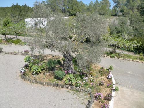 Foto 6 - Villa Es Socorrat