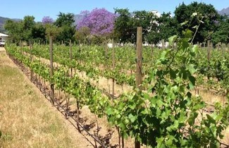 Photo 1 - Jacaranda Wine And Guestfarm
