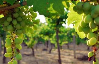 Photo 1 - Agriturismo Il Sorriso Degli Ulivi
