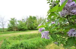 Le Petit Bois Girard 1