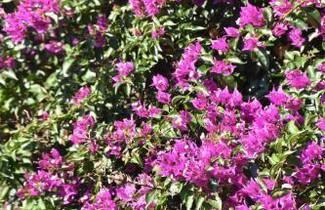 Foto 1 - Azienda Agrituristica Biologica Il Querceto