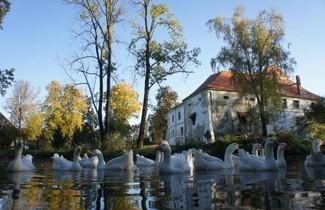Photo 1 - Piotrowice Nyskie Palace
