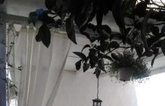 Photo 1 - Il Giardino Del Purgatorio