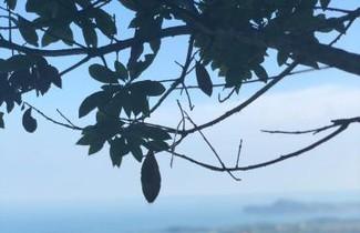 Photo 1 - Apartment in Gardone Riviera mit terrasse