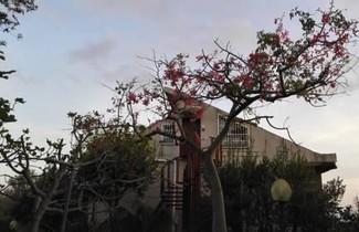 Photo 1 - Lucrezia Loft Garden Catania