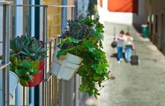 Foto 1 - Duque´s Apartments