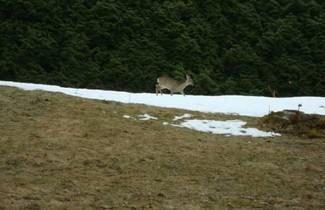 Foto 1 - Le Caribou